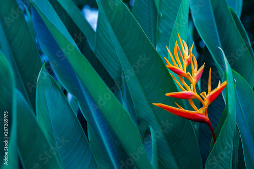 Photo sur Toile Les Textures tropical leaves colorful flower on dark tropical foliage nature background dark green foliage nature