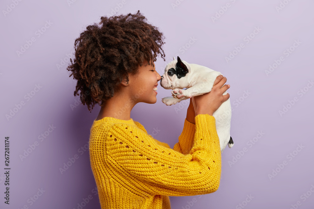 Fototapety, obrazy: Sideways shot of cheerful Afro American woman plays with sweety black and white french bulldog puppy, touch small nose, likes animals, has playful mood, wears casual yellow jumper. Beloved pet