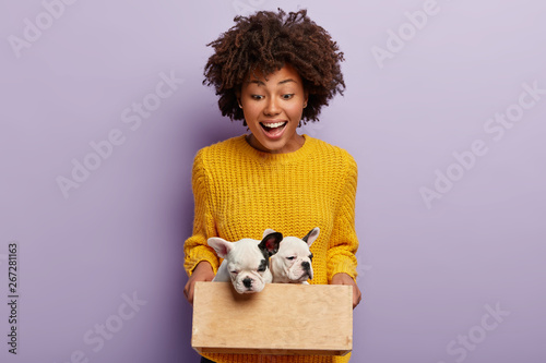 Obraz Happy beautiful woman holds wooden box with two cute pedigree small puppies, glad to be owner of doggy, cares about domestic animals, isolated over purple background. People and pets concept - fototapety do salonu