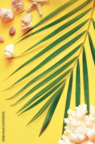 Fototapety, obrazy: Summer vibes. Tropical palm leaf, seashells and starfish. Flat lay, top view