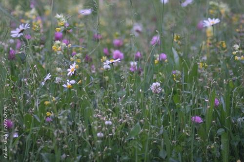 Foto op Plexiglas Weide, Moeras Rettet die Bienen, gegen Artensterben, jeder kann im Garten seine eigenen Beitrag leisten