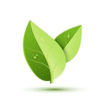 Green Leaf Vector Icon. Organic Eco Symbol Nature Plant Isolate Leaf Icon Design
