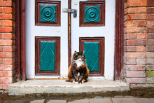 Cute And Beautiful Cat Sitting In Front Of The Old Wooden Door On Istanbul, Turkey.