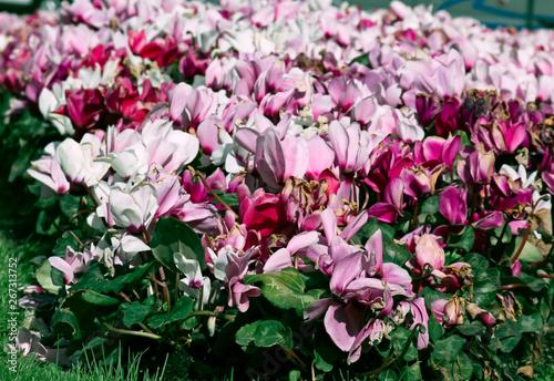 Papel de parede  Flores de colores. Colores vívidos. Tiempo de primavera.