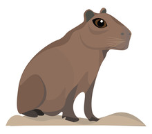Image Of Capybara, Vector Or Color Illustration.