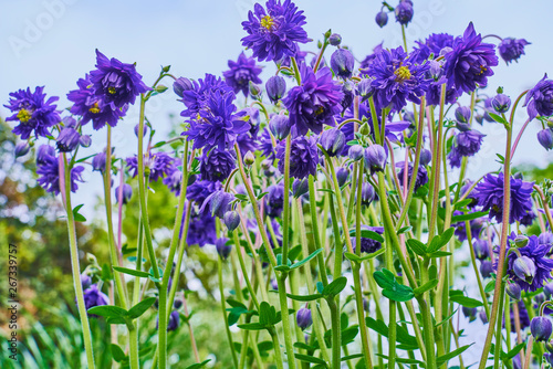 Cadres-photo bureau Lavende 花