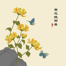Retro Colorful Chinese Style Vector Illustration Elegant Yellow Chrysanthemum Blossom Flower Next To The Rock And Butterfly Flying Around