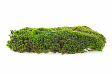 Green Moss Isolated On A White Background. Forest Moss.