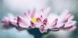 Leinwanddruck Bild - White-pink tender daisy. Mother's Spring Card