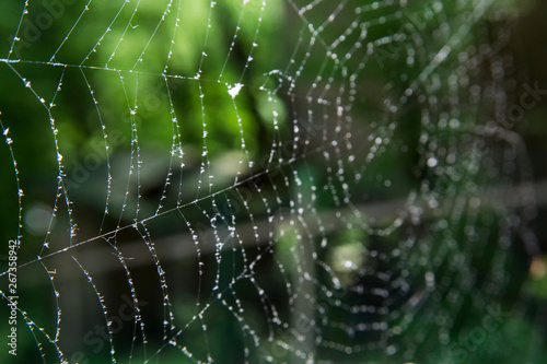 Cobwebs in the forest with dew drops. Canvas-taulu