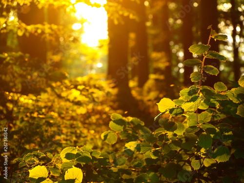 Tuinposter Wijngaard Beskid Wyspowy - Góry Karpaty