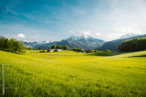 Idyllic landscape in the Alps with blooming meadows in springtime - 267375779