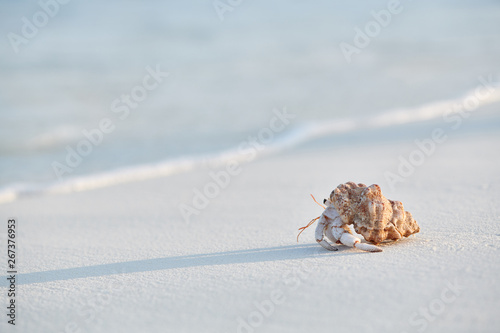 Hermit Crab on a beach Wallpaper Mural