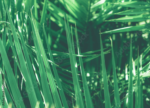 Foto  Tropical palm leaves, floral background