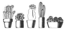 Set Of Cute Cactus Houseplants...