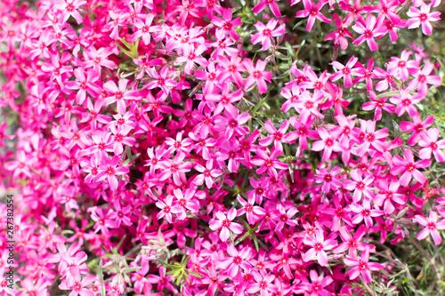 Spoed Fotobehang Roze Opava, Novy Dvur, Czech Republic - 24 April 2019 - Botanical garden in spring, blooming flowers, nice walkway and huge trees