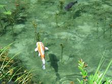 岐阜にあるモネの池