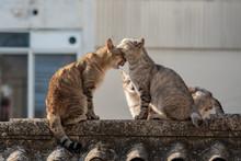 Gatos Callejeros Dándose Caricias