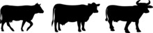 Cow Icon On White Background
