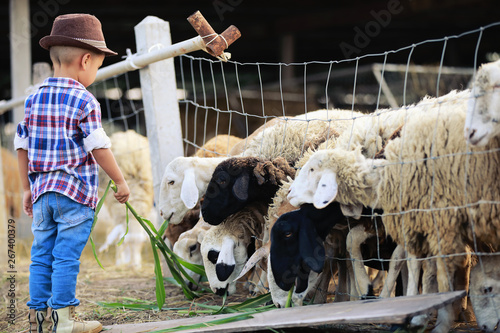 Fotografia The boy is taking care of the sheep that are eating the grass.