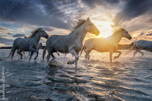 Obraz Konie w świetle zachodzącego słońca - fototapety do salonu