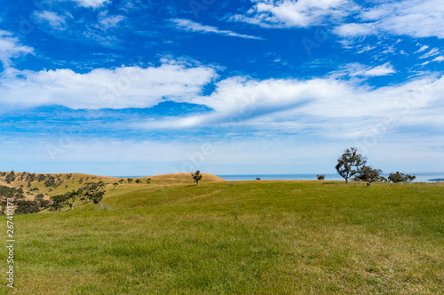 Foto  Agriculture landscape of picturesque pasture, field on sunny day