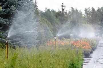 Water sprinkler system working on a garden nursery plantation. Water irrigation system