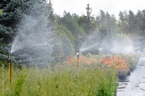 Fototapety, obrazy: Water sprinkler system working on a garden nursery plantation. Water irrigation system