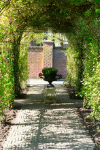 Arch Creeper Plant Enter In The Garden