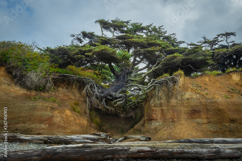 Tree Clinging to Sandy Cliff with Bare Roots Fototapet