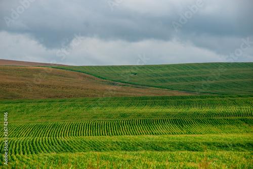Cadres-photo bureau Sauvage endless fields of corn under foggy sky with rain clouds
