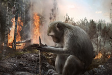 Pyromaniac Monkey Setting Fire...