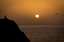 Two Seagulls Meeting In A Rock In Front Of The Sea While The Sun Is Setting At The Horizon. Peace, Relax, Chill.
