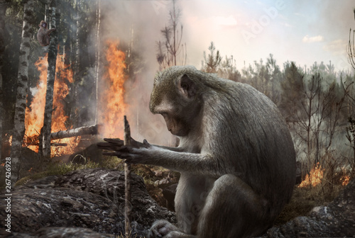 Pyromaniac monkey setting fire in the forest. Deforestation, danger, environment.