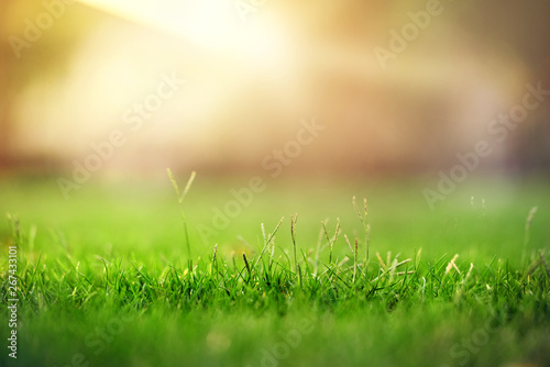Photo sur Aluminium Vert chaux Spring and nature background concept, Close up green grass field with blurred park and sunlight.