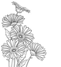 Corner Bouquet Of Outline Gerbera Or Gerber Flower In Black Isolated On White Background.