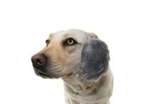 WINTERLABRADOR DOG SCARED OF F...