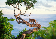 Monkey On The Tree. Animals In...