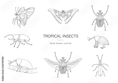 Photo sur Toile Papillons dans Grunge Vector set of tropical insects. Hand drawn outline of atlas moth, weevil, butterfly, goliath, Hercules beetle, Spanish fly. Black and white collection of tropic bugs