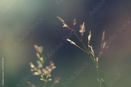 Türaufkleber Makrofotografie Wild grass in the forest. Summer nature abstract background