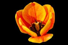 Colorful Macro Flower Portrait...