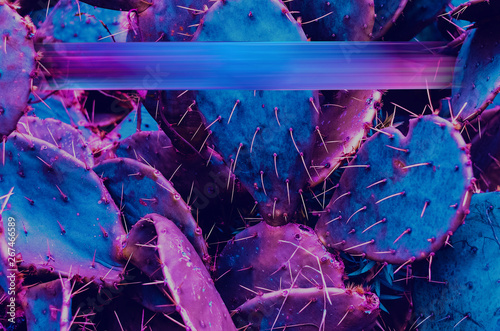 Fototapety, obrazy: Mexican cacti. neon background and texture. logo frame