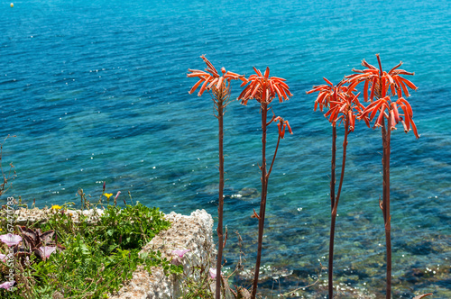 Exotic red flowers and sea © Shmel