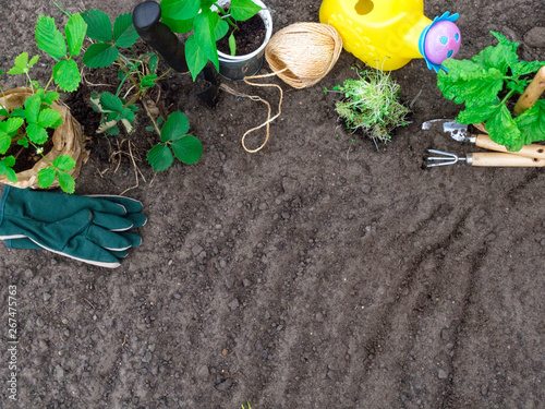 In de dag Tuin Copyspace frame with gardening tools, seedling background