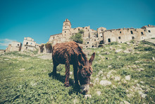 Craco Ghost Town, Province Of Matera, Southern Italian Region Of Basilicata. Donkey Eating The Grass Around The Abandoned Town.