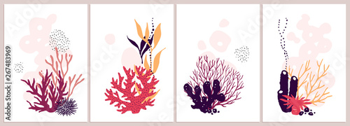 Fotografia, Obraz Set of isolated colorful corals compositions on a white background