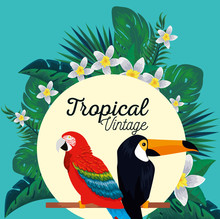 Label With Parrot And Toucan A...