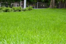 Green Lawn In The Garden