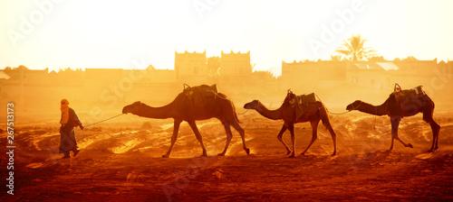 Fototapeta Caravan of camels in Sahara desert, Morocco