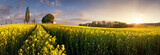 Yellow rape fields at sunset with chapel - 267518955